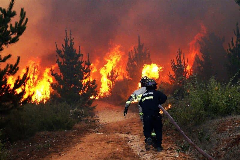 Incêndio na Mata Atlântica coloca aldeias indígenas em risco